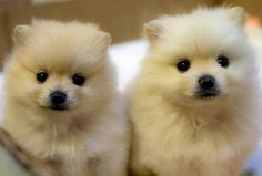awww...these little guys are on my christmas list!