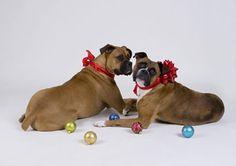 Amy Burkhart Pet Photography - San Diego California Pet Dog Cat Portraits