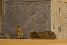 Istanbul Cats #Istanbul #cats #travel