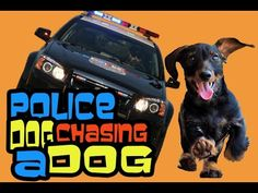 A Police Pursuit Dog vs Dog ( Perro Policía ) Dog Vs Dog, Police Dogs, Animals, Big Dogs, Dog Breeds, Funny Things, Funny, Animales, Animaux