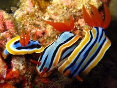 Color palettes dictated by Nudibranches.
