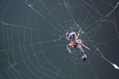 Spider by Ivan Losev on 500px