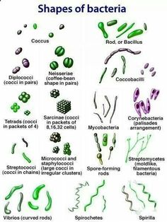 Microbiology! More