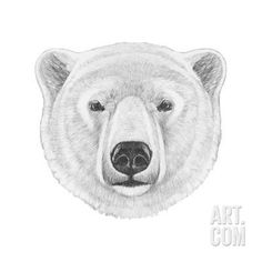 Portrait of Polar Bear. Hand Drawn Illustration. Art Print by victoria_novak at Art.com