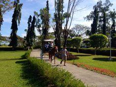 Tamayo farm driveway