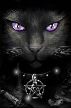 Black Cat / Purple Eyes