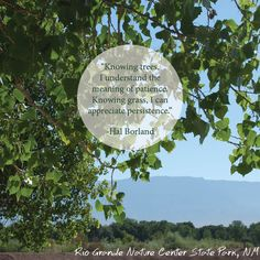 """""""Knowing trees, I understand the meaning of patience. Knowing grass, I can appreciate persistence. """" -Hal Borland   Rio Grande Nature Center"""