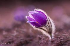Violet Beauty by Jan Stria - Photo 103455609 - 500px