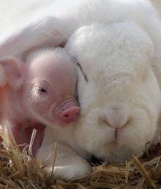 Bunny & Piggy ❤️