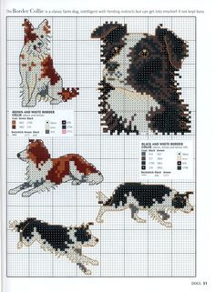 border collie #bordercollie