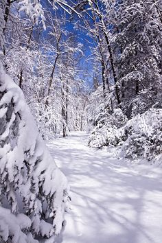 ✯ No FootprintsEn route vers la cabane