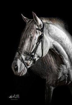 Die 52 besten Bilder von m  Pferde Fotografie  Baby horses Ponies und Pony