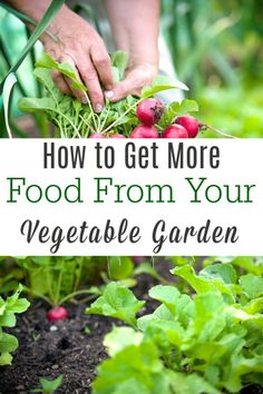When starting a vegetable garden you want to get the most out of every square foot that you can! Here are some ways to have a more calorie intensive garden. Gardening For Beginners, Gardening Tips, Starting A Vegetable Garden, Vegetable Gardening, Succession Planting, Organic Gardening, Sustainable Gardening, Sustainable Living, Homestead Gardens