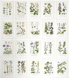 Sandberg Botanica Tapet