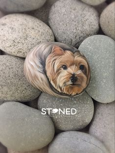 Pebble Painting, Stone Painting, Rock Painting, Vintage Wall Art, Vintage Walls, Painted Rock Animals, Yorkie Dogs, Pet Rocks, Using Acrylic Paint