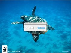 Credit: WWF/ACT Responsible Title: Turtle<br>Agency: Ogilvy & Mather<br> Made for: WWF (Hungary)