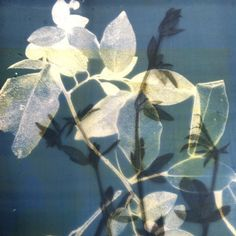 Love the ghostly X-ray quality of a #screenprinting screen over another image Herald Black
