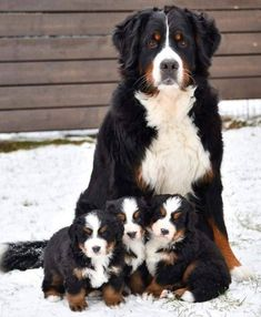 Cute Dogs And Puppies, Baby Dogs, Doggies, Funny Puppies, Puppies Puppies, Beautiful Dogs, Animals Beautiful, Beautiful Family, Beautiful Pictures