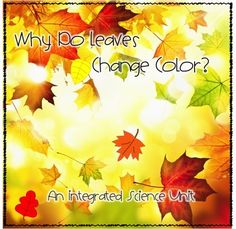 FREE!! includes an informational text about why leaves change color along with 2 follow up activities: a true/false statement sheet and a cause and effect chart to complete.