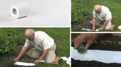 Veľmi malé semienka je vždy ťažké rovnomerne vysiať. Pomôcť vám môže toaletný papier.