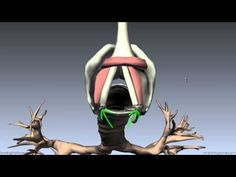 Mucosa of the Larynx and Vocal Cords - Anatomy Tutorial Speech Language Pathology, Speech And Language, Music Therapy, Speech Therapy, Choir Warm Ups, Most Relaxing Song, Singing Classes, 3d Anatomy, Anatomy Tutorial