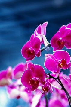 Purple Orchids in tribute to you dear Curd.Pour rendre hommage a toi. Flowers Nature, My Flower, Pink Flowers, Beautiful Flowers, Flower Wallpaper, Iphone Wallpaper, Plante Carnivore, Purple Orchids, Flower Quotes
