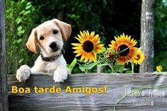 Boa tarde amigos