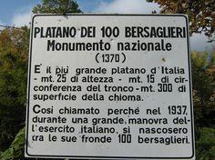 Curiosità   Sul Garda il Platano più Grande d'Italia  #GardaConcierge