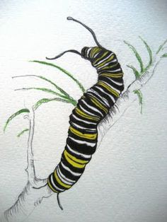 April 22, 2011 - Monarch Caterpillar | A Drawing a Day for a Year -MBL