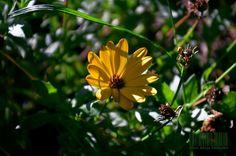 flower10 by alice240