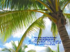 palm tree quote