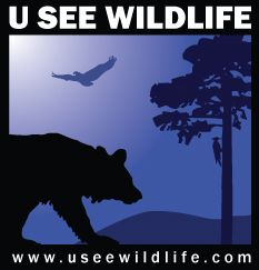 Wildlife webcams -- They also have night vision so you can see animals as they go about their nocturnal business.