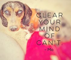 Our positive and wise double dapple dachshund, Mo.
