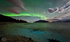 Aurora e dinoflagellati: la bellezza e le luci della natura – Auroras and Dinoflagellates