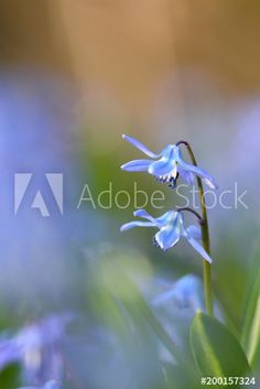 Blaue Blümchen in der Frühlingswiese Clipart, Money, Plants, Graphics, Pretty Pictures, Blue Flowers, Royalty Free Images, Close Up Photography, Nature