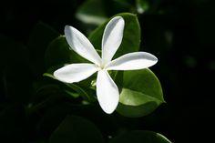 August 2008~ Marie Selby Botanical Gardens- Sarasota, Florida