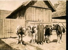 """Andzia z krowami; wystawa """"Zwierzyniec zaprasza – Krowodrza"""" (źródło: materiały prasowe) Krakow, Horses, Animals, Animales, Animaux, Animal, Animais, Horse"""