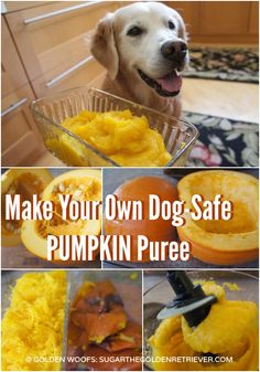 Make your own dog safe pumpkin puree. Simple and easy to make. You can serve the pumpkin puree as a treat or add it on your dog's food. You can also use it to make some delicious pumpkin dog treats.
