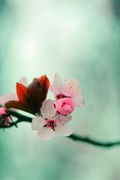 Pink Spring Love