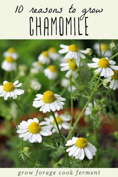 Tall Flowers, Growing Flowers, Planting Flowers, Flower Gardening, Gardening For Beginners, Gardening Tips, Organic Gardening, Vegetable Gardening, Container Gardening