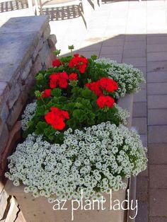 September Gardening Tasks for the Desert Landscape