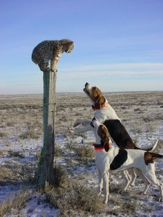 Funny pictures of animals posted every day. We're bringing you the best images of funny pets, weird and cute animals. Treeing Walker Coonhound, Funny Animal Photos, Funny Animals, Cute Animals, Funny Pictures, Baby Bobcat, Mundo Animal, Tier Fotos, Hound Dog