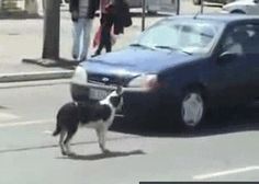 dogs take off front of car at a crosswalk