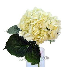 FiftyFlowers.com - Hydrangea Ivory White Flower Perhaps for pair of arrangements at ceremony?
