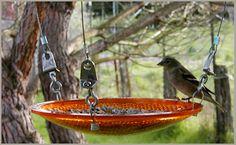 Eco-friendly bird feeder.