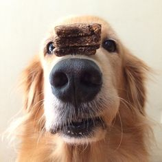 Balance stack of @rubysgalley treats on nose? Check  #tgif everybody  by minkabean