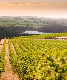 Napa Valley Vineyards summer-destinations