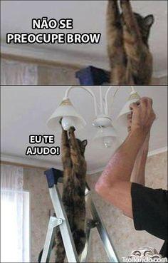 Gato que gosta de ajudar!!                                                                                                                                                                                 Mais