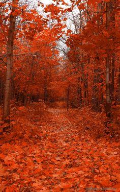 Scarlet autumn. Forest. Moscow. Russia. Багряная осень. Москва.  by Мария Миронова on 500px