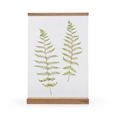 Floating frame - Herbarium - Botanical art - Decor - Paper cut collage - Photo - Minimalistic design - Perfect gift-A3  #A3size #botanicalart #floatingframe #herbarium #homedecor #minimaldesign #naturaloak #papercut #perfectgift #tableframe #twoglassesframe #uniquegift #wood